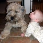 Downward Dog: Yoga With Henry